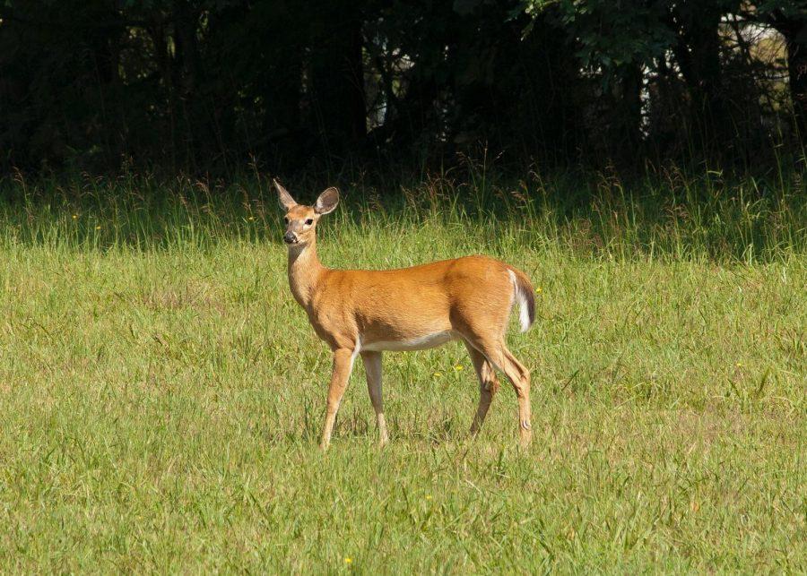 Animal+sightings
